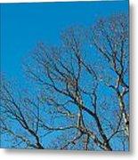 Tree Profile Metal Print