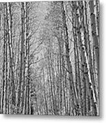Trees Along A Road, Log Cabin Gold Metal Print