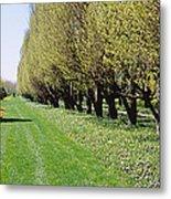 Trees Along A Walkway In A Botanical Metal Print