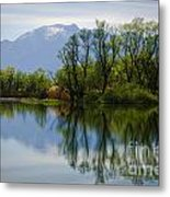 Trees And Lake Metal Print