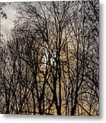 Trees And Late Afternoon Light Metal Print