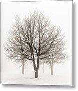 Trees In Winter Fog Metal Print