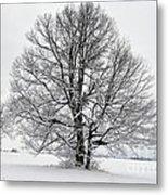 Trees In Winter Metal Print
