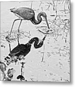 Tri-colored Meal Bw Metal Print