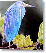 Tricolored Heron Metal Print