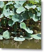 Water Plant Metal Print