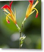 Tropical Flower 6 Metal Print