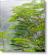 Tropical Forest, Seychelles Metal Print