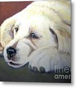 Tuckered Out Metal Print by Amber Nissen