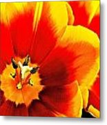 Tulip Intimacy Metal Print