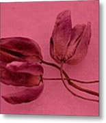 Tulip Lover Metal Print