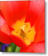 Tulips At Thanksgiving Point - 28 Metal Print