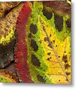 Turning Leaves Metal Print by Stephen Anderson