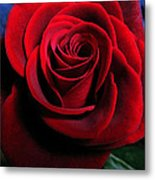 Twilight Rose  Metal Print by Etti PALITZ