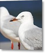 Two Boardwalk Gulls Metal Print