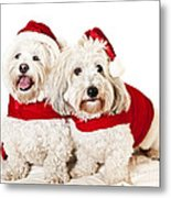 Two Cute Dogs In Santa Outfits Metal Print