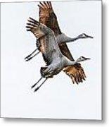 Two Sandhill Cranes Metal Print