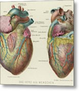 Two Views Of The Heart, With  The Parts Metal Print