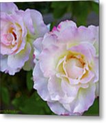 Two White Roses Metal Print