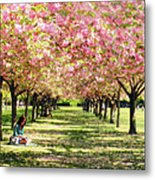 Under The Cherry Blossom Trees Metal Print