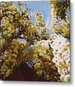 Up Into Wisteria Metal Print