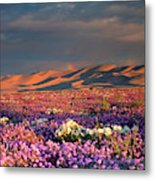 Usa, California, Dumont Dunes Metal Print