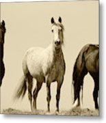 Usa, Wyoming, Young Wild Stallions Metal Print