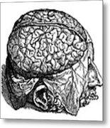 Vesalius: Brain, 1543 Metal Print