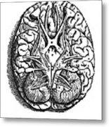 Vesalius: Brain Metal Print