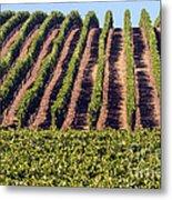 Vineyard Rows Metal Print