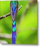 Violet-tailed Sylph Metal Print