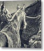 Waiting Horses Metal Print