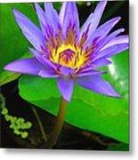 Water Lily 20 Metal Print