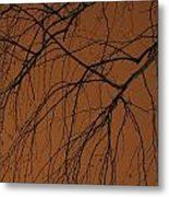 Weeping Birches Metal Print