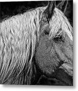 Western Horse In Alberta Canada Metal Print