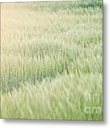 Wheat Field  Metal Print