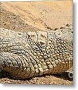 White Crocodile Metal Print