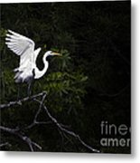 White Egret's Takeoff Metal Print