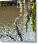 White Heron In Magnolia Cemetery Metal Print