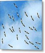White Pelican Sky Metal Print