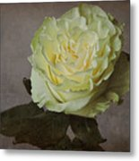 White Rose With Old Paper Texture Metal Print
