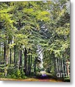 Whitwell Wood Metal Print