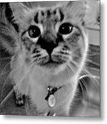 Who Could Resist This Puss Metal Print