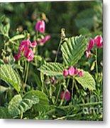 Wild Grass Flower Metal Print