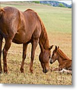 Wild Horse Mother And Foal Metal Print