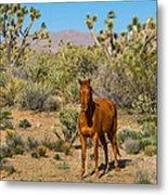 Wild Horse Of Joshua Tree Metal Print