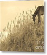 Wild Horse On The Outer Banks Metal Print