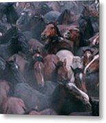 Wild Horses In A Pen Metal Print