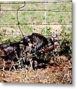 Wild Turkeys Metal Print by Thea Wolff