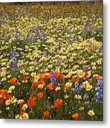 Wildflower Wonderland 9 Metal Print